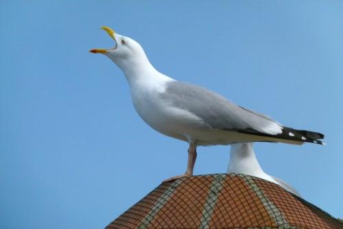 Image of bird on roof. Bird pest control.